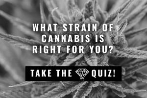 Strain Quiz